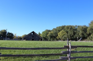 Ranch life with horses